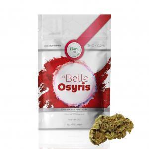 La Belle Osyris - Fleur CBD